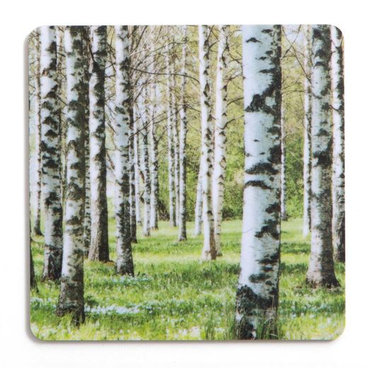 Birch forest green coaster